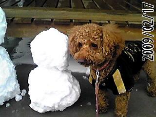 雪だマル。